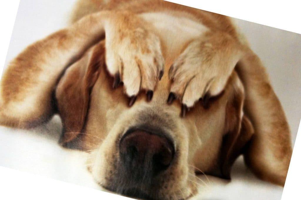 Nuestras mascotas también sufren estrés